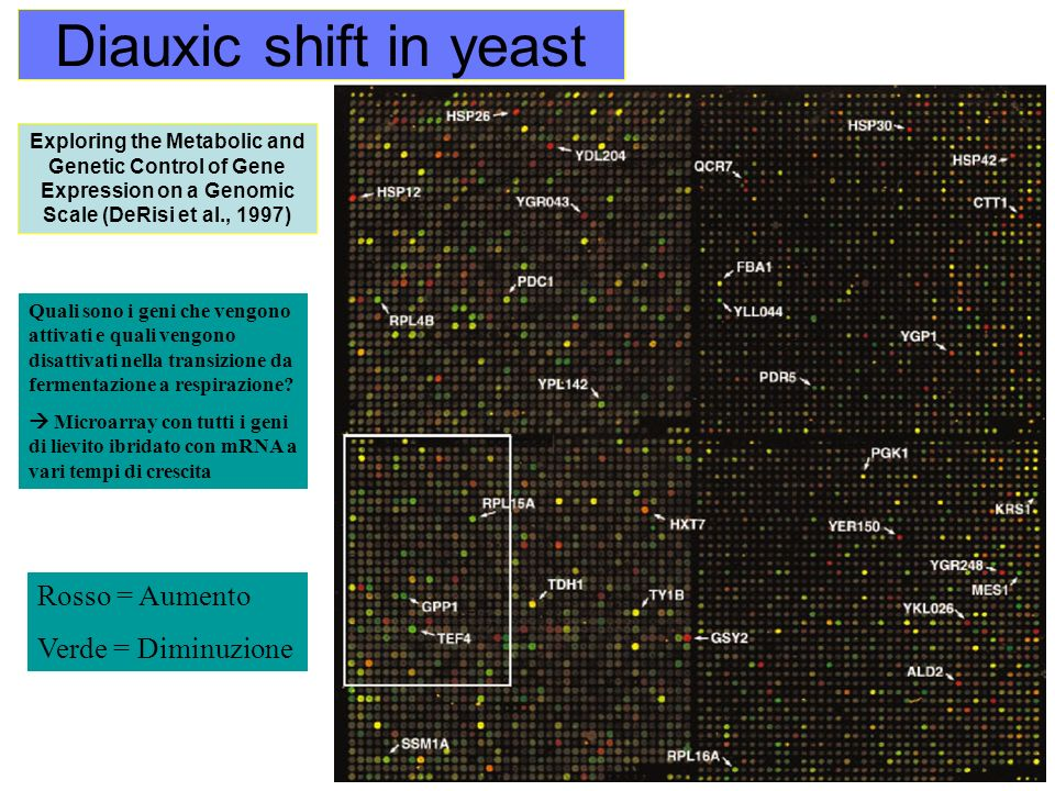 Diauxic shift in yeast Exploring the Metabolic and Genetic Control of Gene Expression on a Genomic Scale (DeRisi et al., 1997) Quali sono i geni che v
