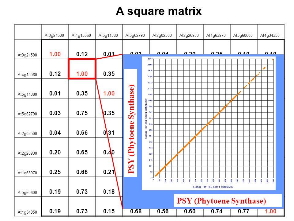 A square matrix At3g21500At4g15560At5g11380At5g62790At2g02500At2g26930At1g63970At5g60600At4g34350 At3g21500 1.000.120.010.030.040.200.250.19 At4g15560 0.121.000.350.750.660.650.660.73 At5g11380 0.010.351.000.350.310.400.210.180.15 At5g62790 0.030.750.351.000.690.700.78 0.68 At2g02500 0.040.660.310.691.000.770.720.670.56 At2g26930 0.200.650.400.700.771.000.800.670.60 At1g63970 0.250.660.210.780.720.801.000.880.74 At5g60600 0.190.730.180.780.67 0.881.000.77 At4g34350 0.190.730.150.680.560.600.740.771.00 PSY (Phytoene Synthase)