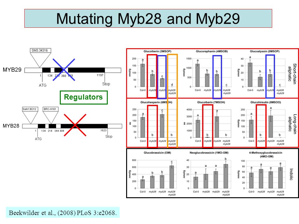 Mutating Myb28 and Myb29 Beekwilder et al., (2008) PLoS 3:e2068. Regulators