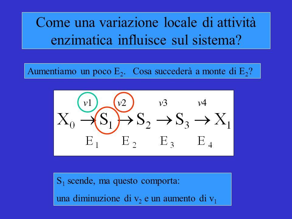 Come una variazione locale di attività enzimatica influisce sul sistema.