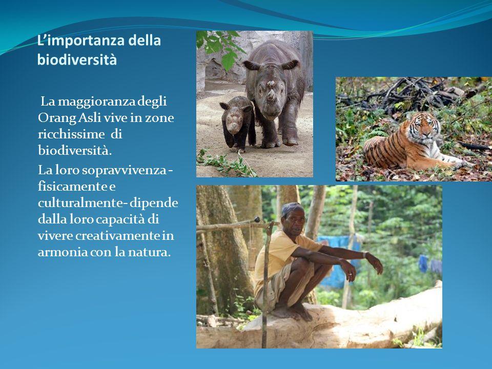 Limportanza della biodiversità La maggioranza degli Orang Asli vive in zone ricchissime di biodiversità. La loro sopravvivenza - fisicamente e cultura