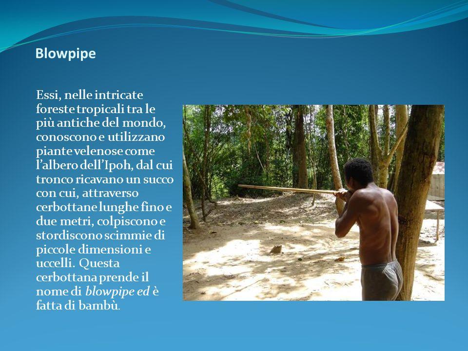 Blowpipe Essi, nelle intricate foreste tropicali tra le più antiche del mondo, conoscono e utilizzano piante velenose come lalbero dellIpoh, dal cui t