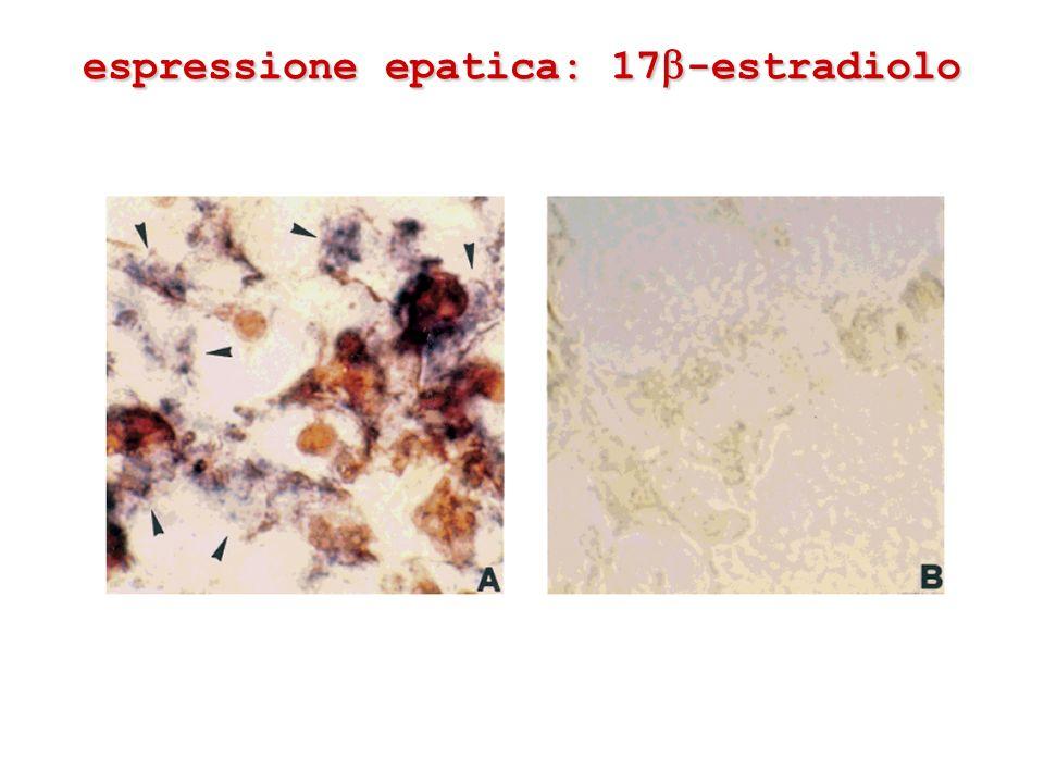 espressione epatica: 17 -estradiolo