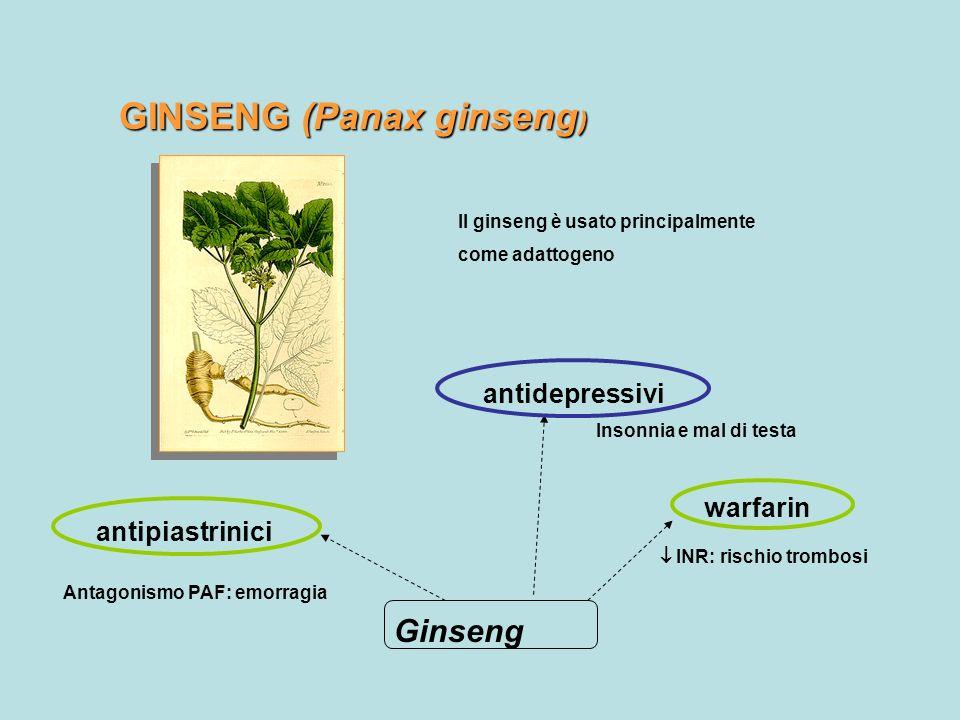 GINSENG (Panax ginseng ) Il ginseng è usato principalmente come adattogeno Ginseng warfarin INR: rischio trombosi antipiastrinici Antagonismo PAF: emo