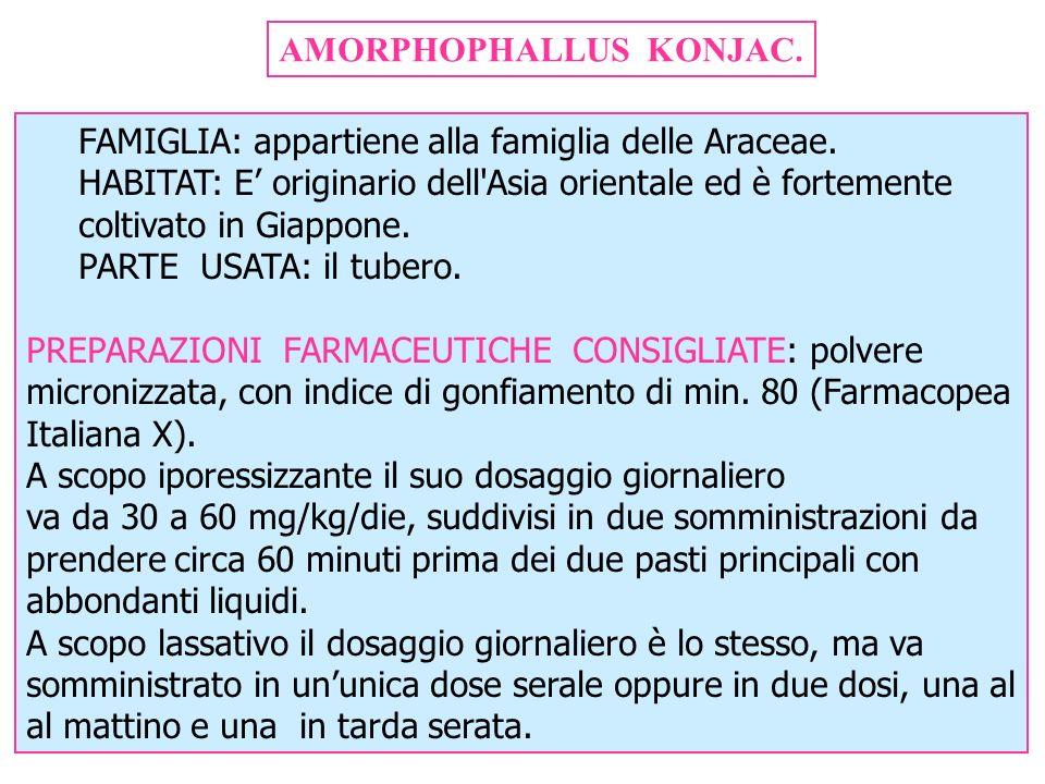 AMORPHOPHALLUS KONJAC. FAMIGLIA: appartiene alla famiglia delle Araceae. HABITAT: E originario dell'Asia orientale ed è fortemente coltivato in Giappo