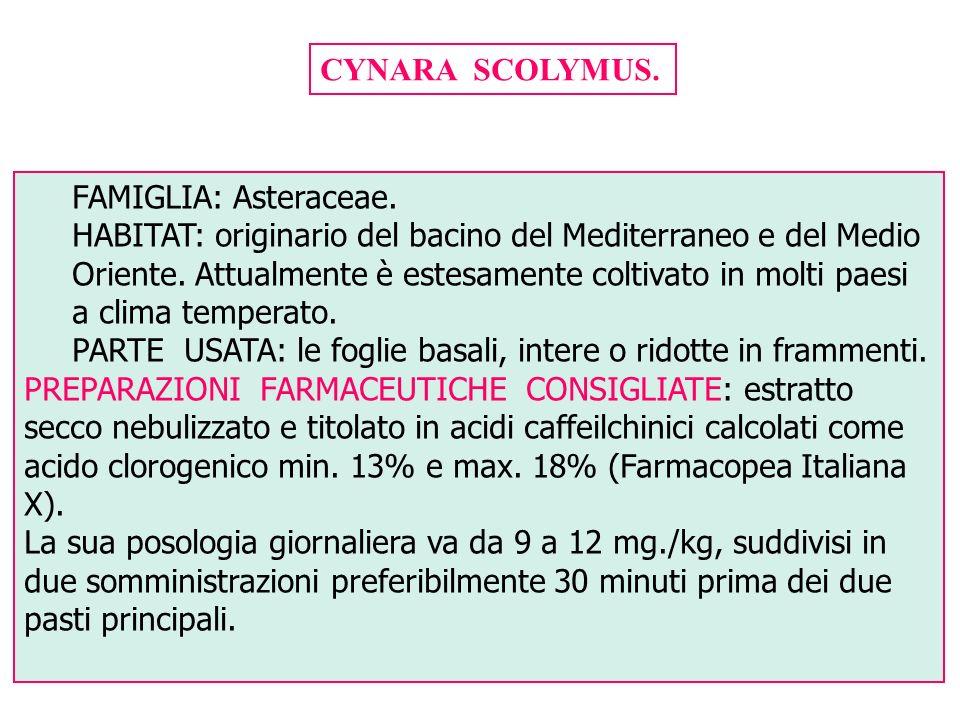CYNARA SCOLYMUS. FAMIGLIA: Asteraceae. HABITAT: originario del bacino del Mediterraneo e del Medio Oriente. Attualmente è estesamente coltivato in mol