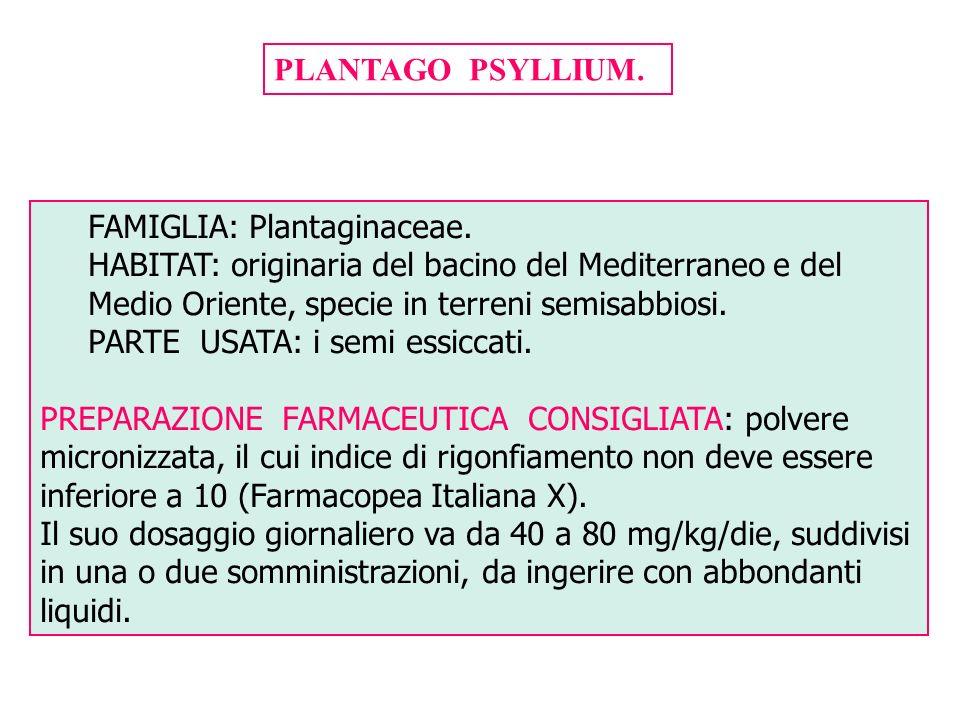 PLANTAGO PSYLLIUM. FAMIGLIA: Plantaginaceae. HABITAT: originaria del bacino del Mediterraneo e del Medio Oriente, specie in terreni semisabbiosi. PART