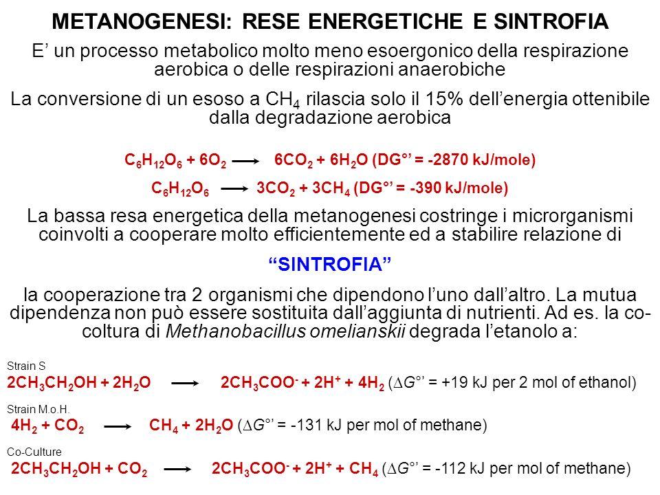 METANOGENESI: RESE ENERGETICHE E SINTROFIA E un processo metabolico molto meno esoergonico della respirazione aerobica o delle respirazioni anaerobich
