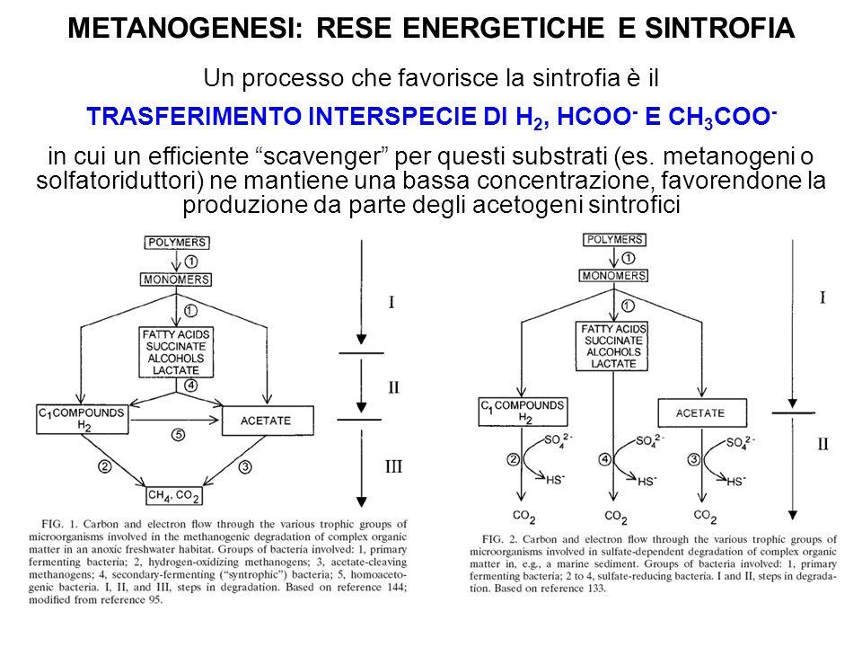 METANOGENESI: RESE ENERGETICHE E SINTROFIA Un processo che favorisce la sintrofia è il TRASFERIMENTO INTERSPECIE DI H 2, HCOO - E CH 3 COO - in cui un
