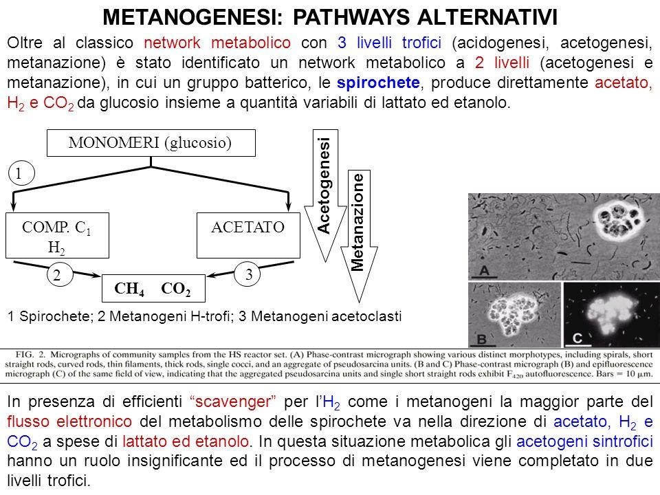Oltre al classico network metabolico con 3 livelli trofici (acidogenesi, acetogenesi, metanazione) è stato identificato un network metabolico a 2 live