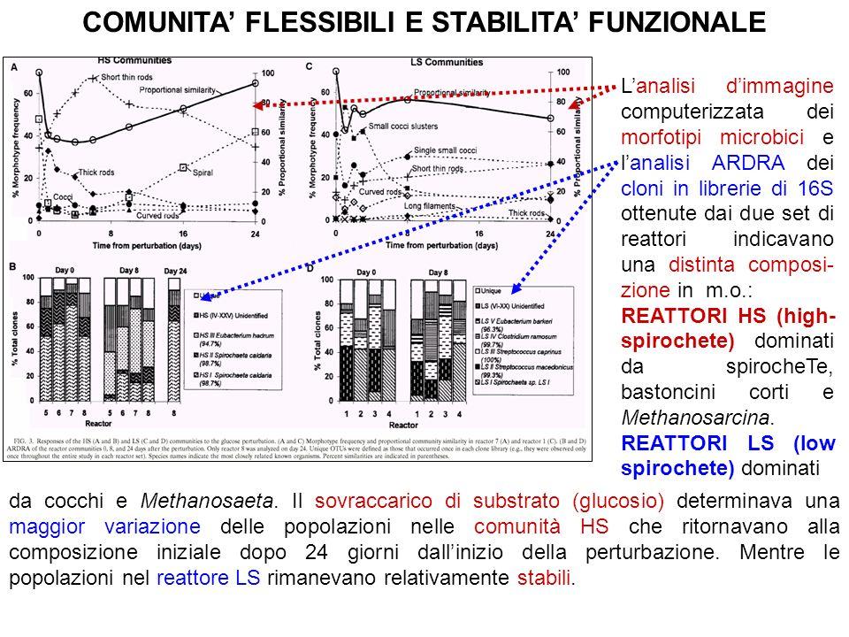 COMUNITA FLESSIBILI E STABILITA FUNZIONALE Lanalisi dimmagine computerizzata dei morfotipi microbici e lanalisi ARDRA dei cloni in librerie di 16S ott