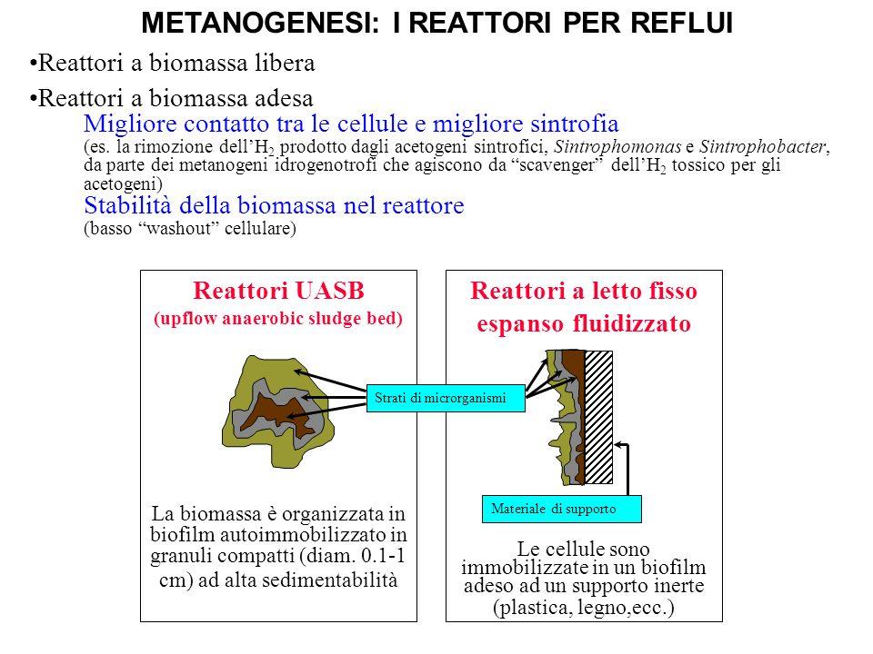 METANOGENESI: I REATTORI PER REFLUI Reattori a letto fisso espanso fluidizzato Le cellule sono immobilizzate in un biofilm adeso ad un supporto inerte
