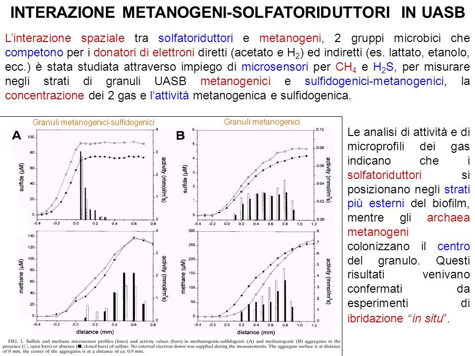 INTERAZIONE METANOGENI-SOLFATORIDUTTORI IN UASB Linterazione spaziale tra solfatoriduttori e metanogeni, 2 gruppi microbici che competono per i donato