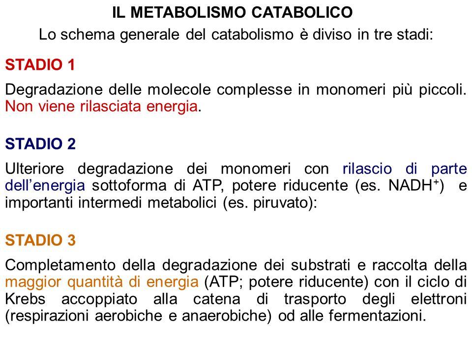 Lo schema generale del catabolismo è diviso in tre stadi: STADIO 1 Degradazione delle molecole complesse in monomeri più piccoli. Non viene rilasciata