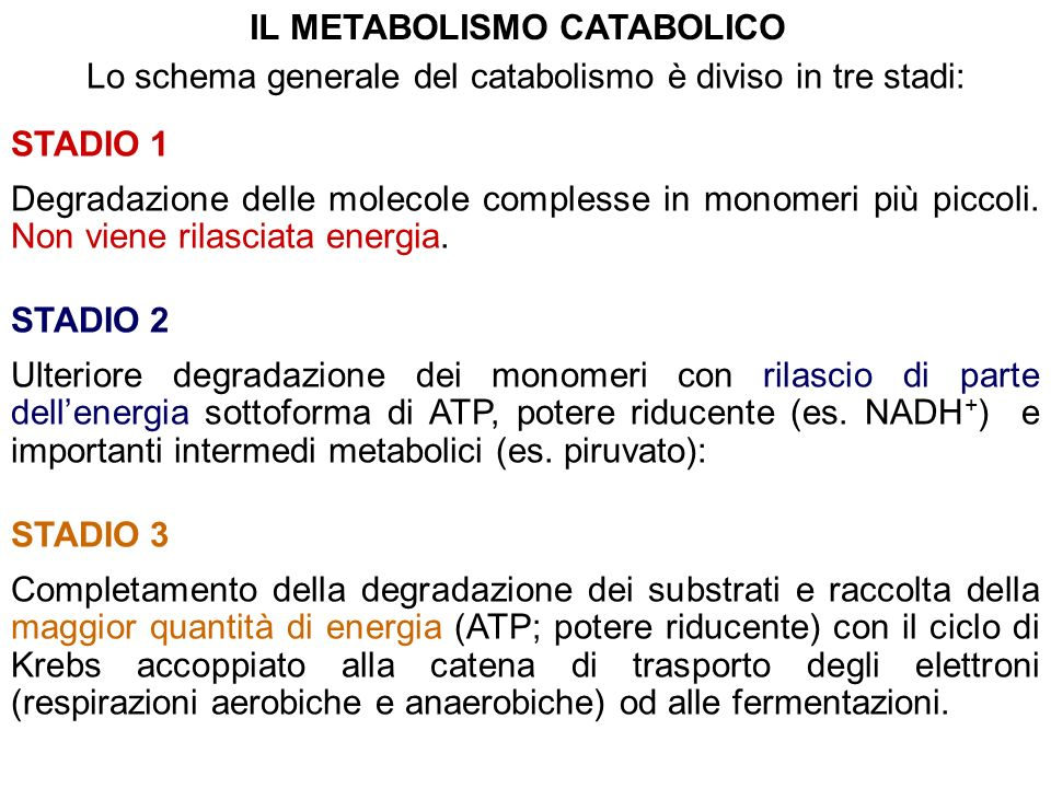 COMUNITA FLESSIBILI E STABILITA FUNZIONALE Quale è la stabilità dei processi metabolici metanogenici esposti a stress.