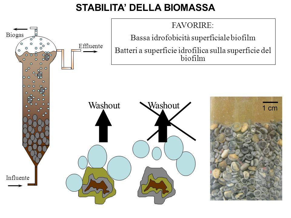 STABILITA DELLA BIOMASSA Influente Effluente Biogas Washout FAVORIRE: Bassa idrofobicità superficiale biofilm Batteri a superficie idrofilica sulla su