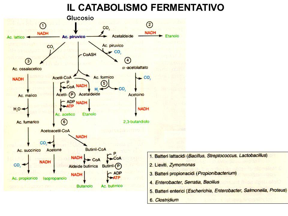 IL CATABOLISMO FERMENTATIVO Glucosio