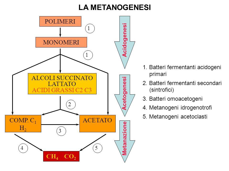 LA METANOGENESI POLIMERI MONOMERI ALCOLI SUCCINATO LATTATO ACIDI GRASSI C2 C3 COMP. C 1 H 2 ACETATO CH 4 CO 2 1 1 2 3 45 Acidogenesi Acetogenesi Metan