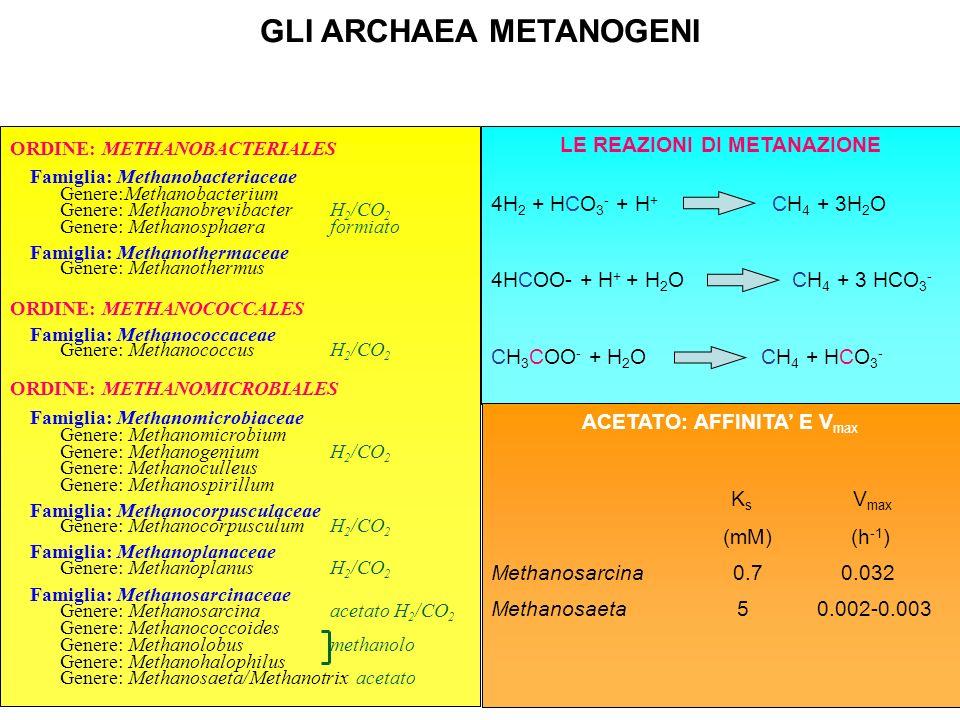 GLI ARCHAEA METANOGENI ORDINE: METHANOBACTERIALES Famiglia: Methanobacteriaceae Genere:Methanobacterium Genere: Methanobrevibacter H 2 /CO 2 Genere: M