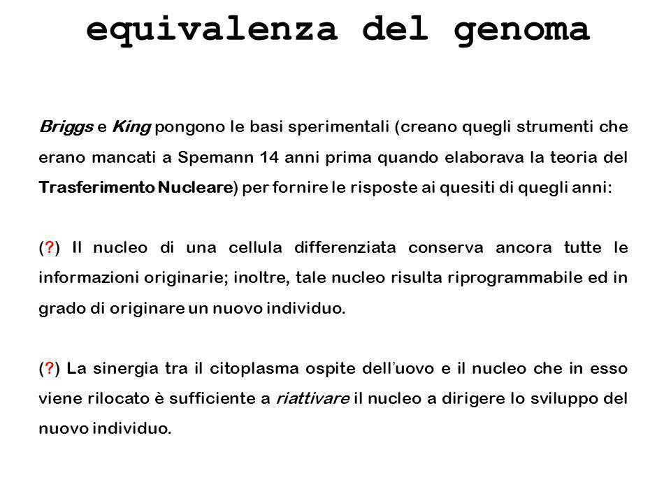Briggs e King pongono le basi sperimentali (creano quegli strumenti che erano mancati a Spemann 14 anni prima quando elaborava la teoria del Trasferim