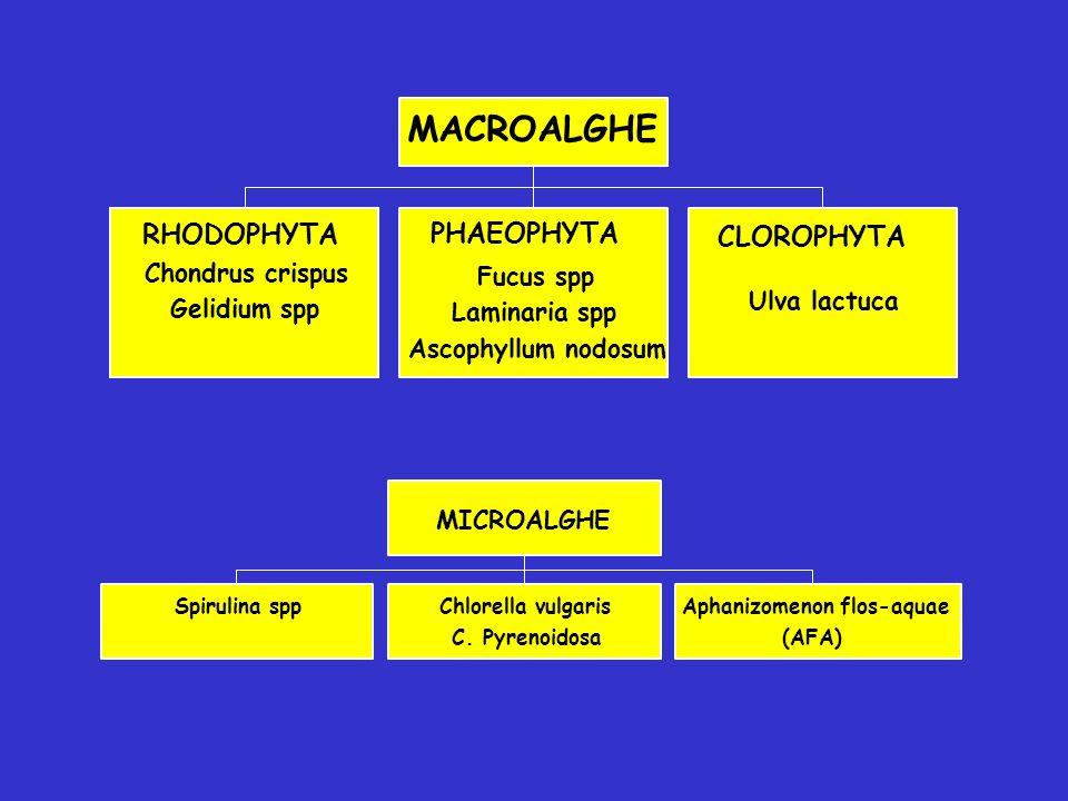 Spirulina sppChlorella vulgaris C. Pyrenoidosa Aphanizomenon flos-aquae (AFA) MICROALGHE RHODOPHYTA Chondrus crispus Gelidium spp PHAEOPHYTA Fucus spp