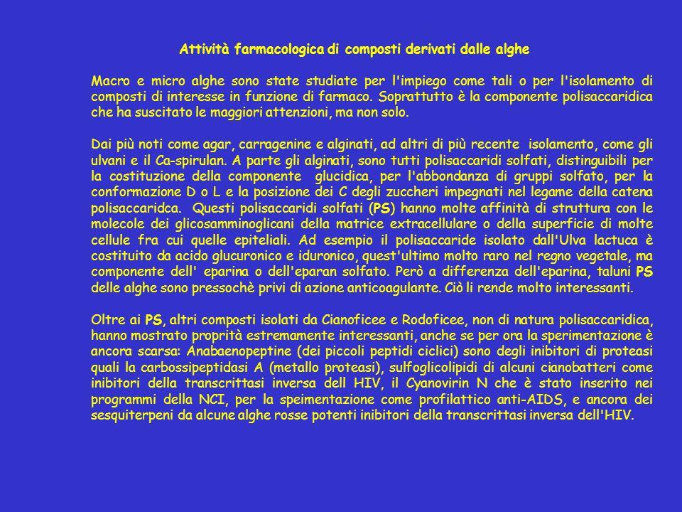 Attività farmacologica di composti derivati dalle alghe Macro e micro alghe sono state studiate per l'impiego come tali o per l'isolamento di composti