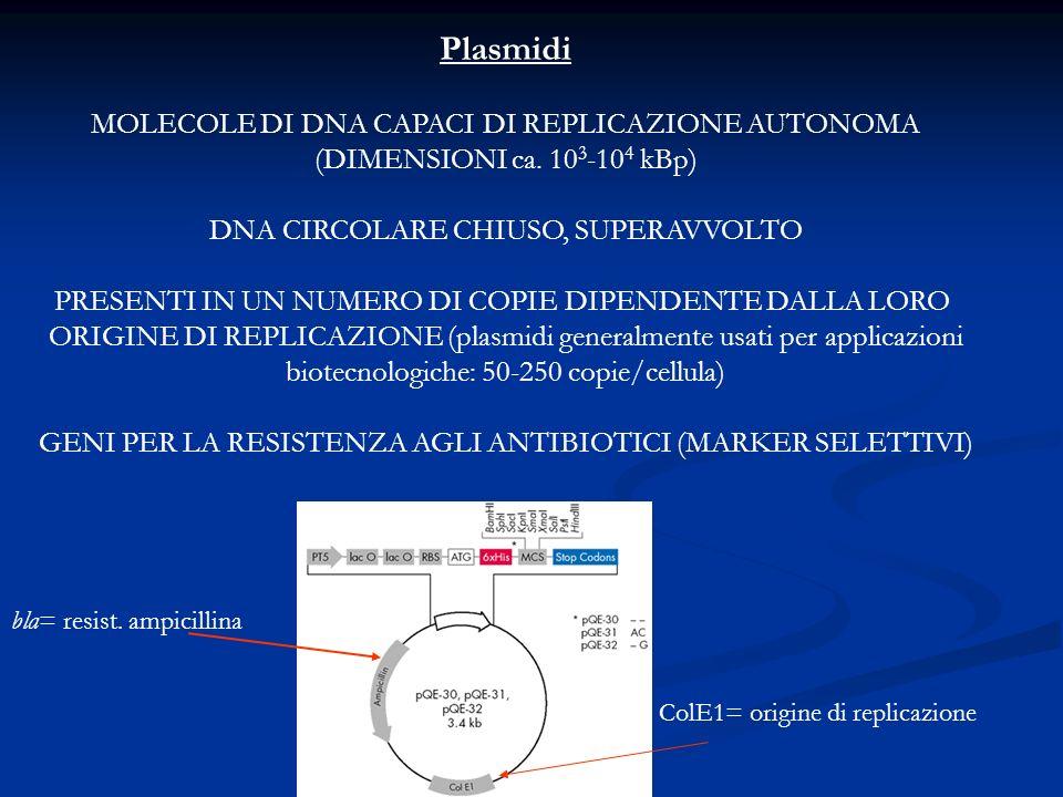 Plasmidi MOLECOLE DI DNA CAPACI DI REPLICAZIONE AUTONOMA (DIMENSIONI ca. 10 3 -10 4 kBp) DNA CIRCOLARE CHIUSO, SUPERAVVOLTO PRESENTI IN UN NUMERO DI C