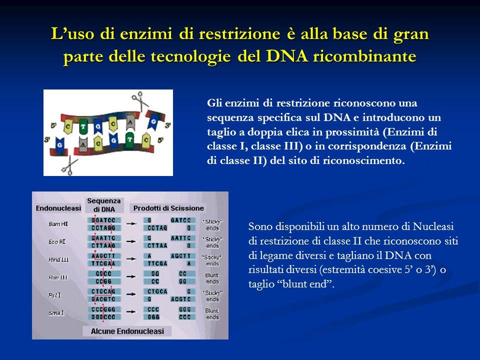 Luso di enzimi di restrizione è alla base di gran parte delle tecnologie del DNA ricombinante Gli enzimi di restrizione riconoscono una sequenza speci
