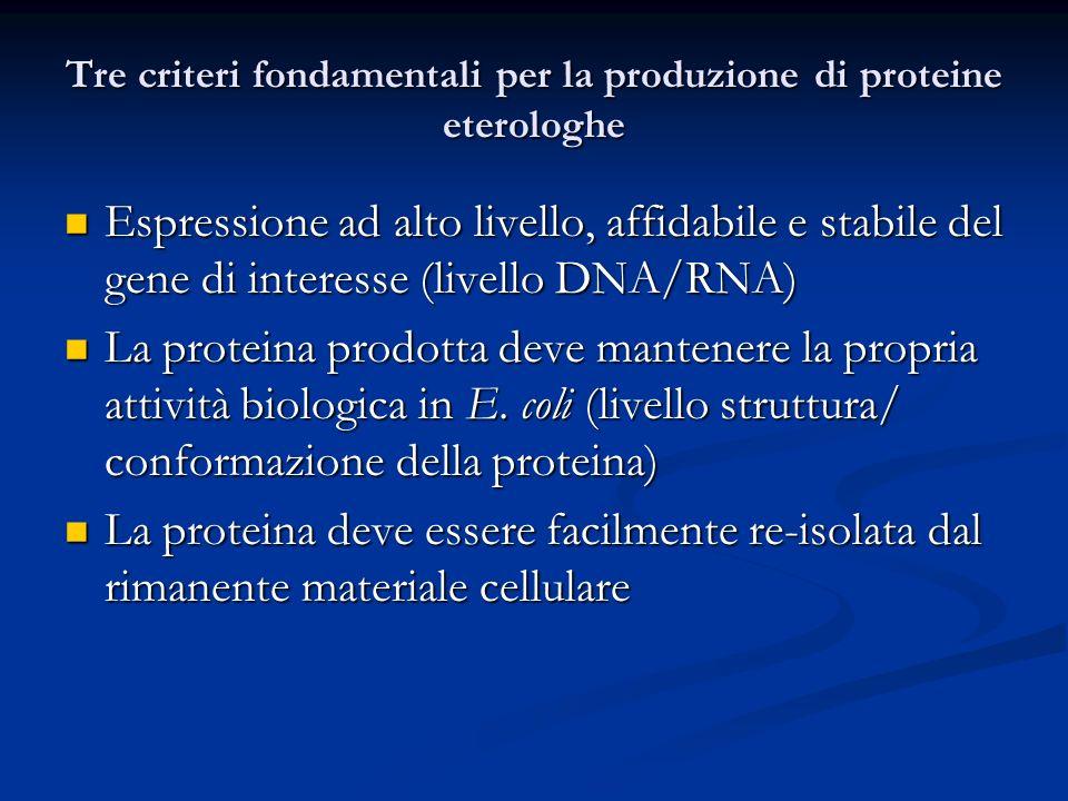 Tre criteri fondamentali per la produzione di proteine eterologhe Espressione ad alto livello, affidabile e stabile del gene di interesse (livello DNA