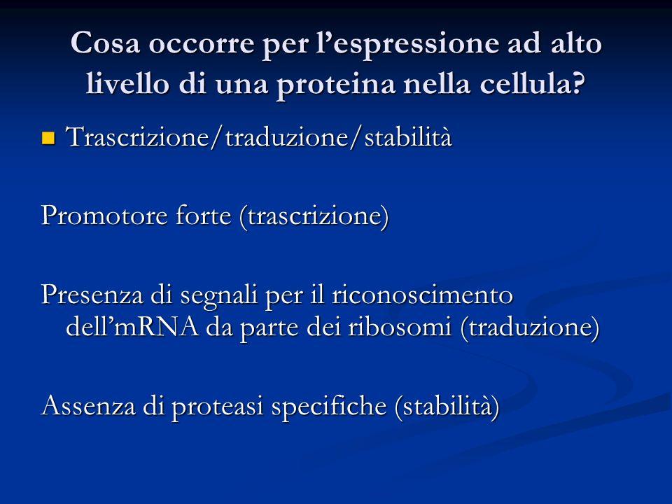 Cosa occorre per lespressione ad alto livello di una proteina nella cellula? Trascrizione/traduzione/stabilità Trascrizione/traduzione/stabilità Promo
