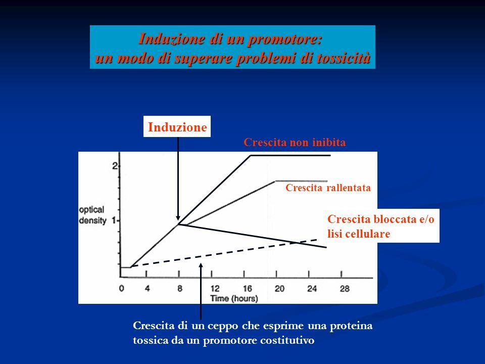 Induzione di un promotore: un modo di superare problemi di tossicità Induzione Crescita non inibita Crescita rallentata Crescita bloccata e/o lisi cel