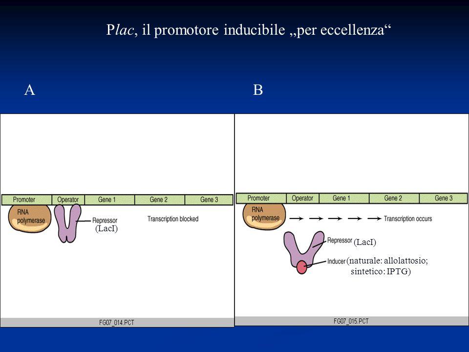 Plac, il promotore inducibile per eccellenza AB (LacI) (naturale: allolattosio; sintetico: IPTG)