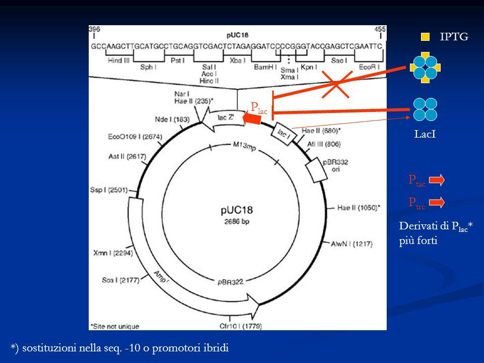 P lac LacI IPTG P tac Derivati di P lac * più forti P trc *) sostituzioni nella seq. -10 o promotori ibridi
