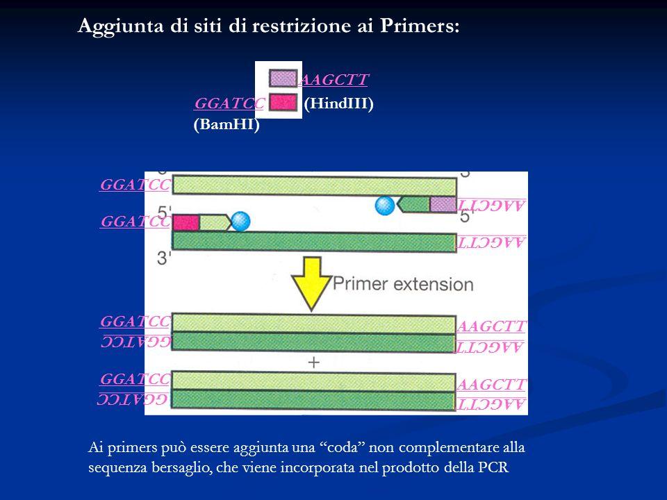 Ai primers può essere aggiunta una coda non complementare alla sequenza bersaglio, che viene incorporata nel prodotto della PCR Aggiunta di siti di re