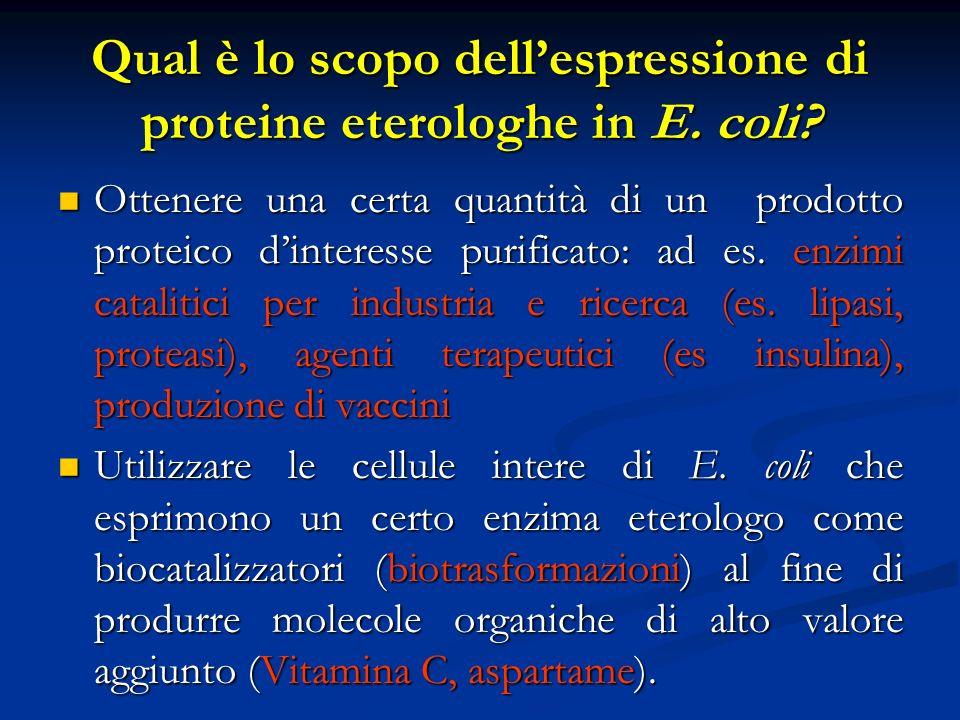 Qual è lo scopo dellespressione di proteine eterologhe in E. coli? Ottenere una certa quantità di un prodotto proteico dinteresse purificato: ad es. e