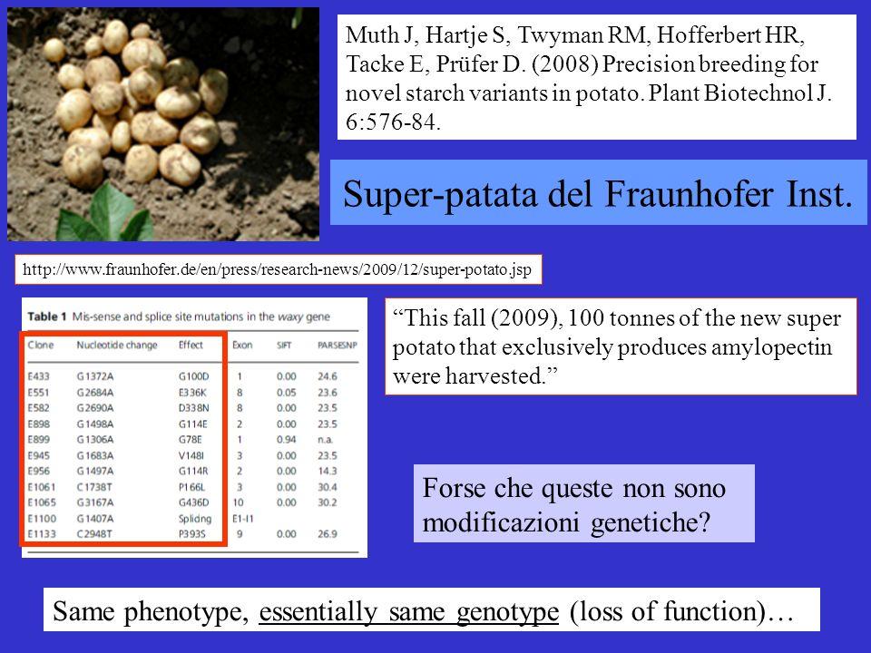 http://www.fraunhofer.de/en/press/research-news/2009/12/super-potato.jsp This fall (2009), 100 tonnes of the new super potato that exclusively produce