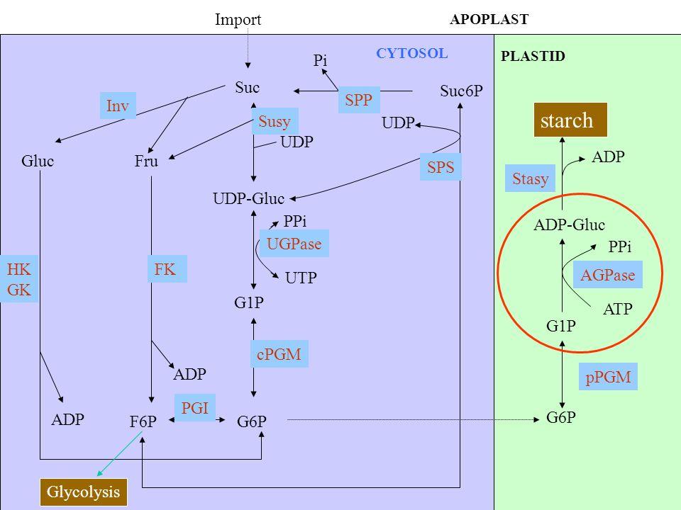 Suc Import Suc6P Pi SPP GlucFru Inv UDP Susy UDP-Gluc G1P G6PF6P ADP PGI Glycolysis HK GK ADP CYTOSOL PLASTID FK PPi UTP UGPase cPGM UDP SPS G6P G1P p