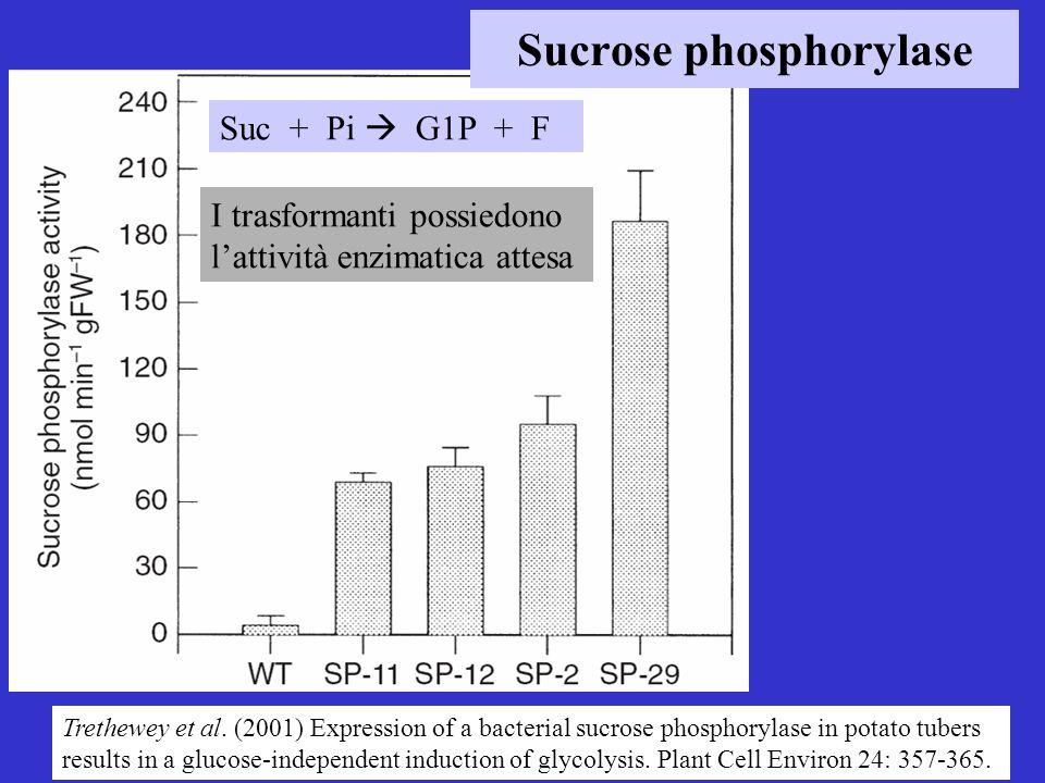 Suc + Pi G1P + F I trasformanti possiedono lattività enzimatica attesa Sucrose phosphorylase Trethewey et al. (2001) Expression of a bacterial sucrose
