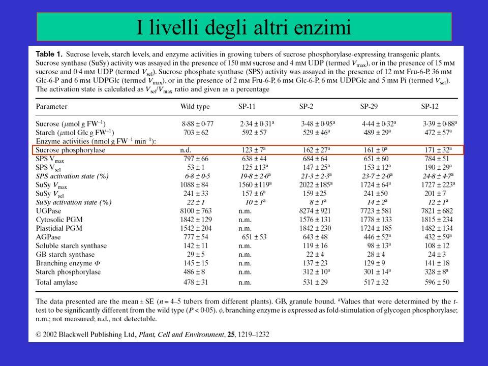 I livelli degli altri enzimi
