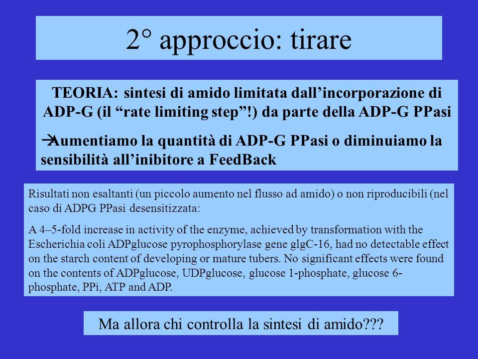 2° approccio: tirare TEORIA: sintesi di amido limitata dallincorporazione di ADP-G (il rate limiting step!) da parte della ADP-G PPasi Aumentiamo la q
