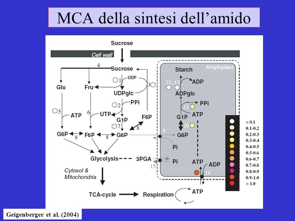 MCA della sintesi dellamido Geigenberger et al. (2004)