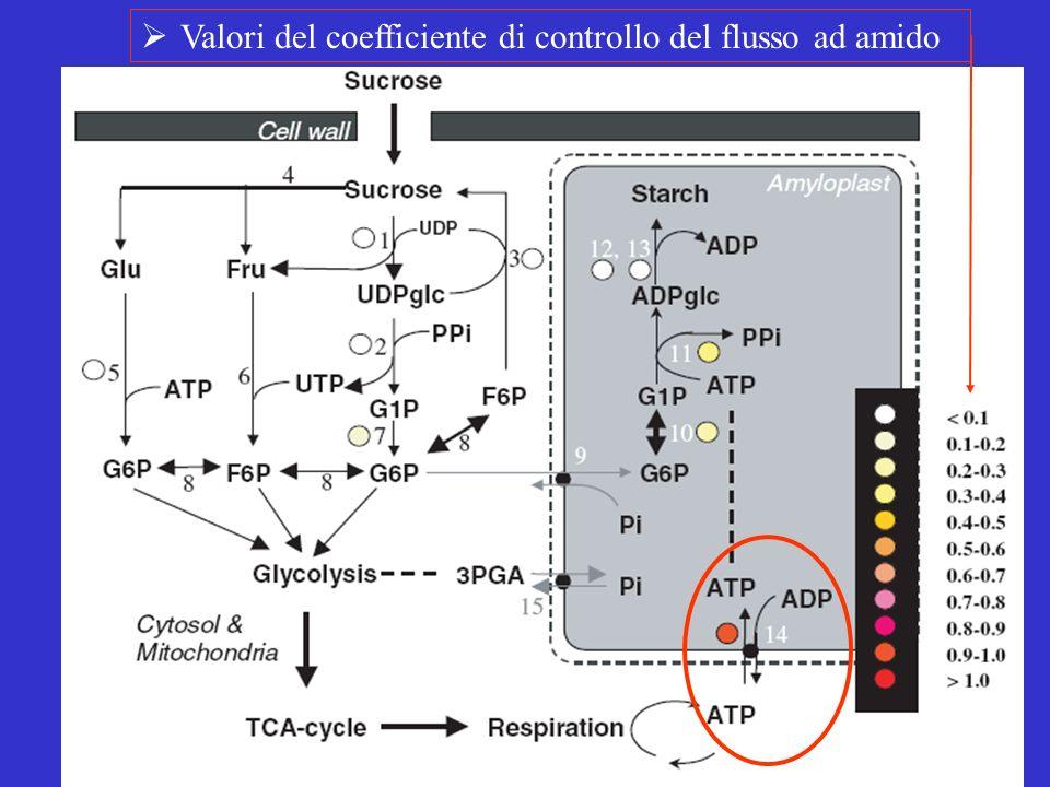 Valori del coefficiente di controllo del flusso ad amido