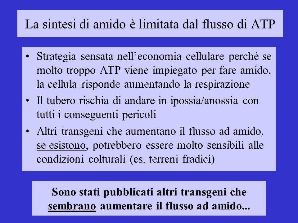 La sintesi di amido è limitata dal flusso di ATP Strategia sensata nelleconomia cellulare perchè se molto troppo ATP viene impiegato per fare amido, l
