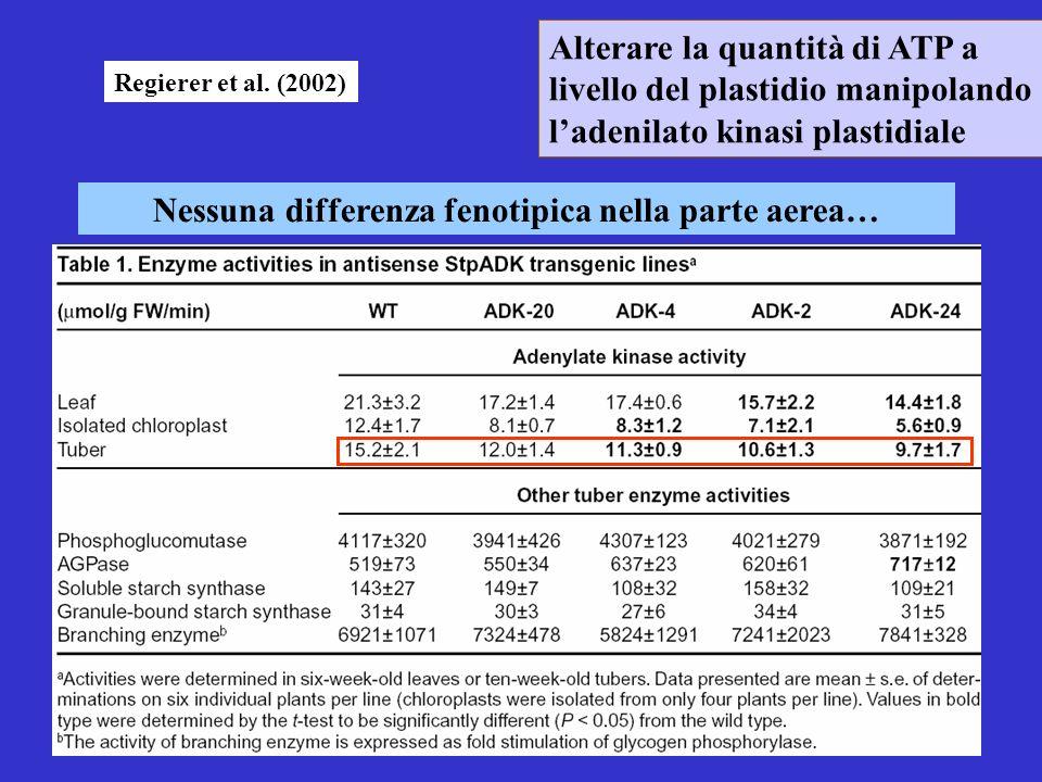 Nessuna differenza fenotipica nella parte aerea… Alterare la quantità di ATP a livello del plastidio manipolando ladenilato kinasi plastidiale Regiere
