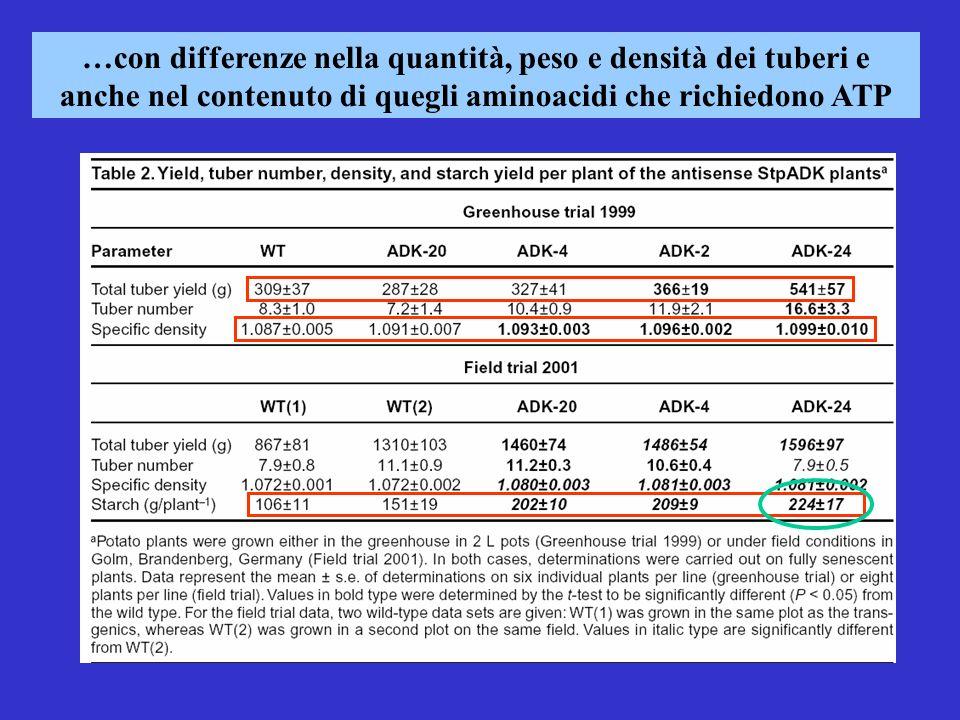 …con differenze nella quantità, peso e densità dei tuberi e anche nel contenuto di quegli aminoacidi che richiedono ATP