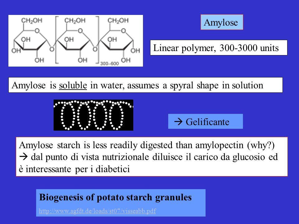 Amylose is soluble in water, assumes a spyral shape in solution Gelificante Amylose starch is less readily digested than amylopectin (why?) dal punto di vista nutrizionale diluisce il carico da glucosio ed è interessante per i diabetici Linear polymer, 300-3000 units Amylose Biogenesis of potato starch granules http://www.agfdt.de/loads/st07/visseabb.pdf