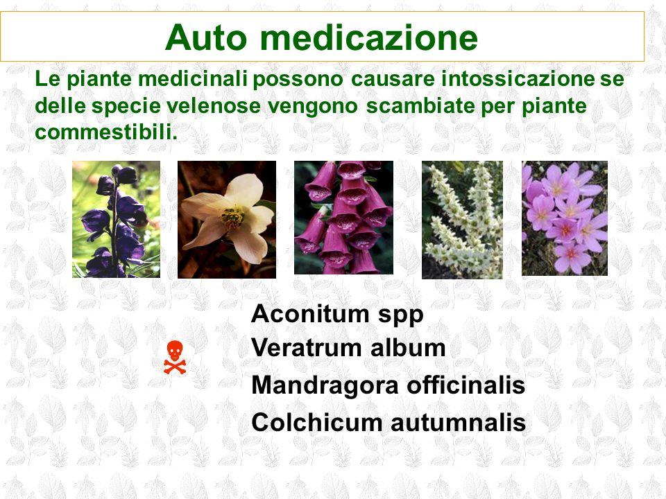 Auto medicazione Le piante medicinali possono causare intossicazione se delle specie velenose vengono scambiate per piante commestibili. Aconitum spp