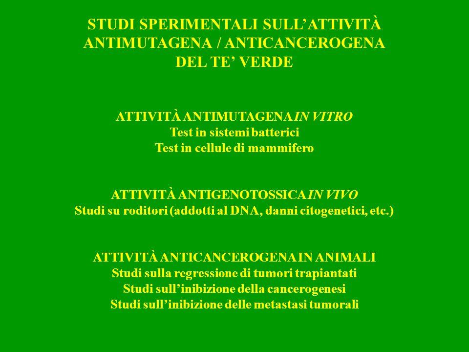 STUDI SPERIMENTALI SULLATTIVITÀ ANTIMUTAGENA / ANTICANCEROGENA DEL TE VERDE ATTIVITÀ ANTIMUTAGENA IN VITRO Test in sistemi batterici Test in cellule d