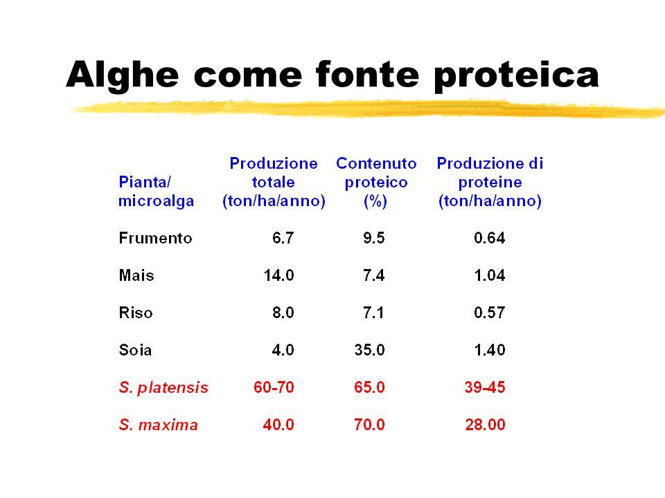 Alghe come fonte proteica