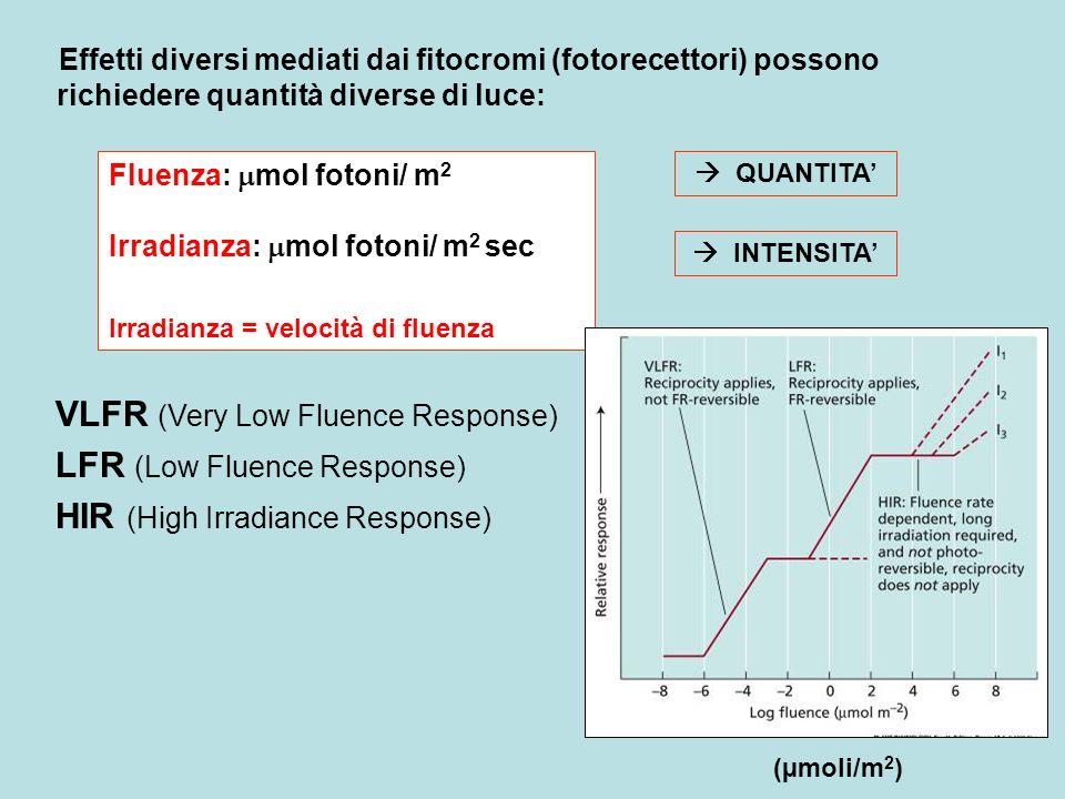 Effetti diversi mediati dai fitocromi (fotorecettori) possono richiedere quantità diverse di luce: Fluenza: mol fotoni/ m 2 Irradianza: mol fotoni/ m